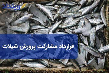 قرارداد مشارکت پرورش ماهی یا شیلات
